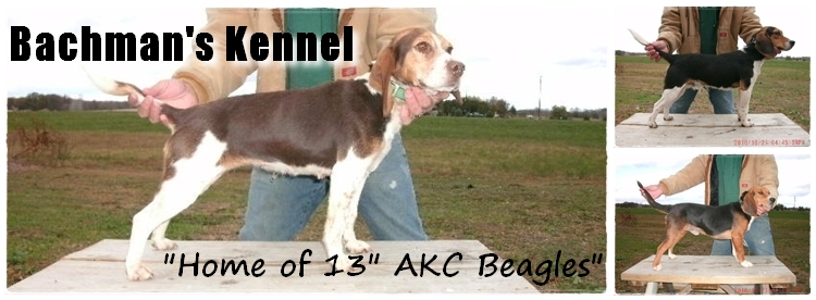 Bachman's Kennel -